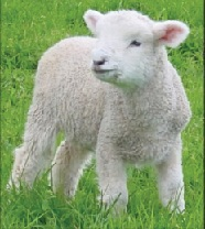 The Easter Lamb – FREE family resource to observe the real Easter tradition